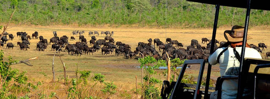 Authentic wildlife safaris
