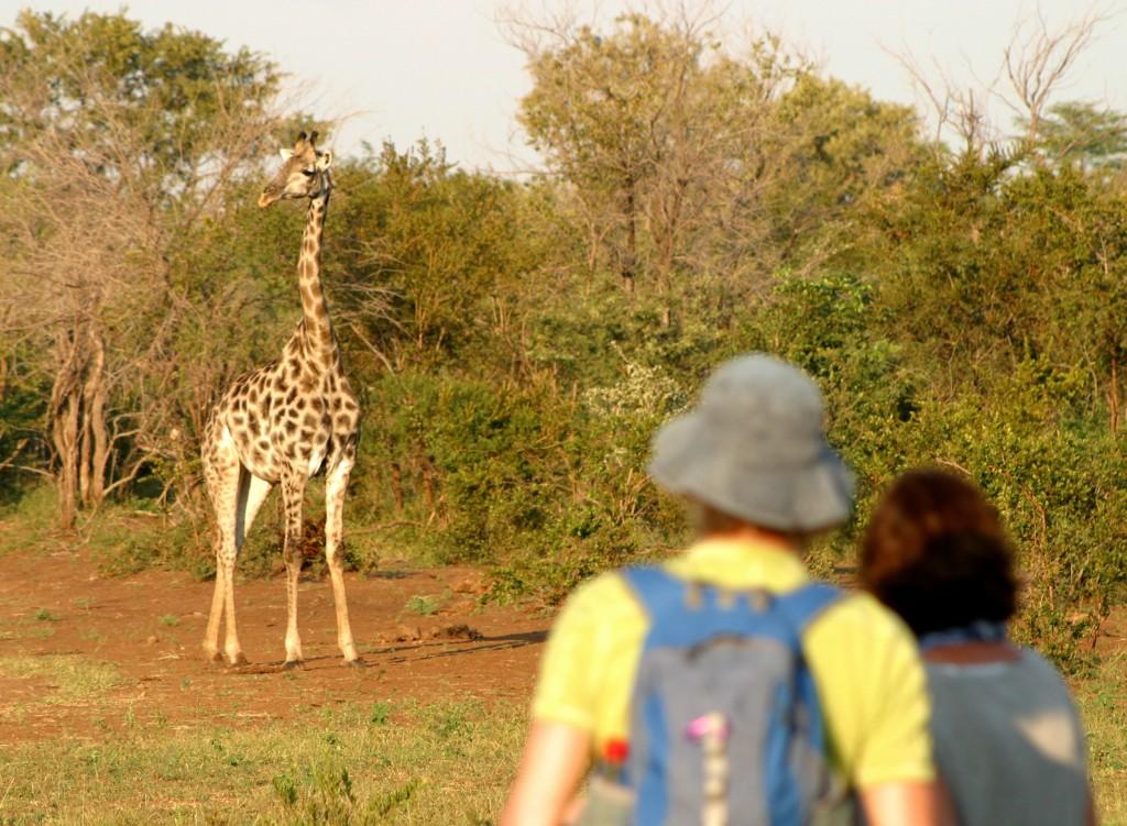Walking safari.