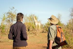 walk giraffe